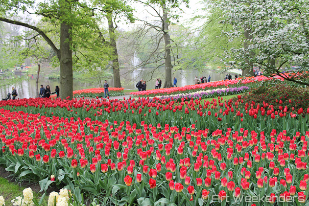 The-Netherlands-Keukenhof-Gardens