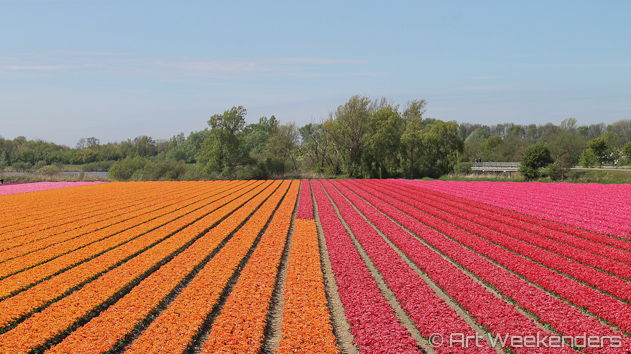 The-Netherlands-Lisse-Tulip-Fields-Keukenhof-Gardens.