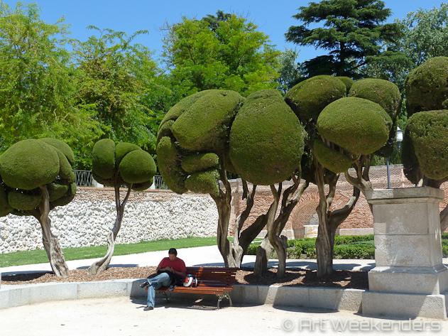 Spain-Madrid-relaxing-trees